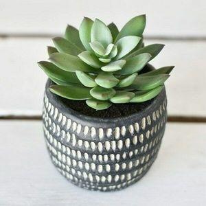 Faux Succulent in Black Textured Pot